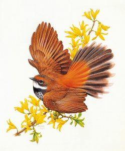 Названия птиц на английском языке
